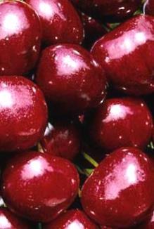 Ķirsis Saldais Ti-Ki /Prunus avium/