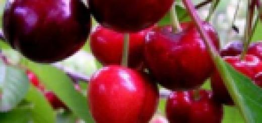 Ķirsis Saldais Tjučevka /Prunus avium/